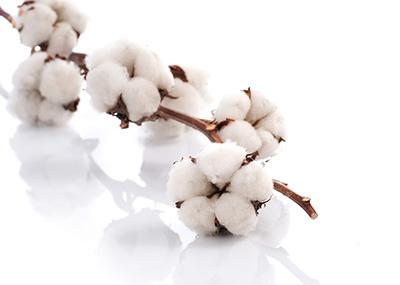 纯棉纱线原料产区